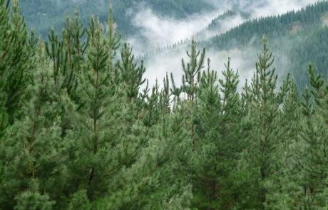 Forest Enterprises