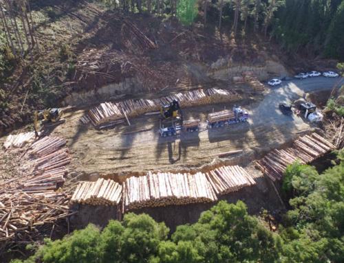 Forest Enterprises expands Gisborne branch