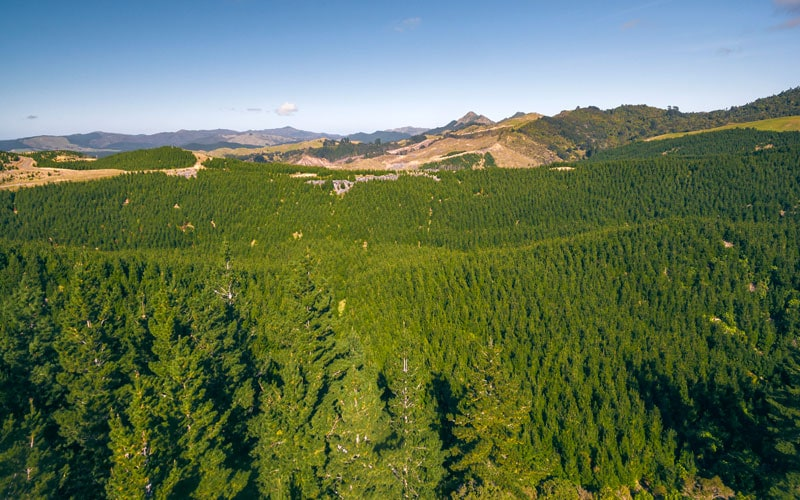 Wairarapa Group Forest Investment