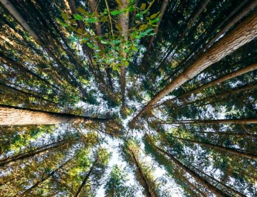 Forest Owners say ETS revisions timely and necessary for climate change goals