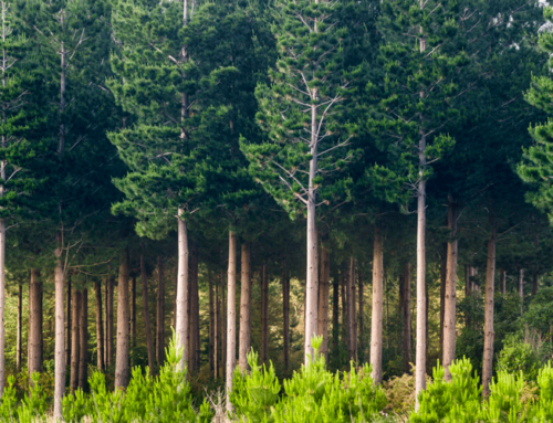 Forestry investments prove resilient